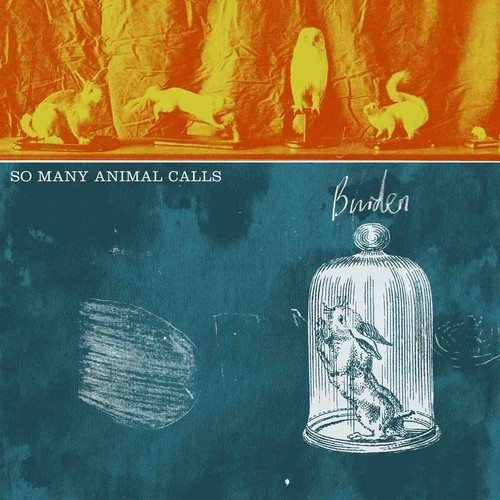Song of the Day – So Many Animal Calls, 'Stories' – follow @SMAnimalCalls