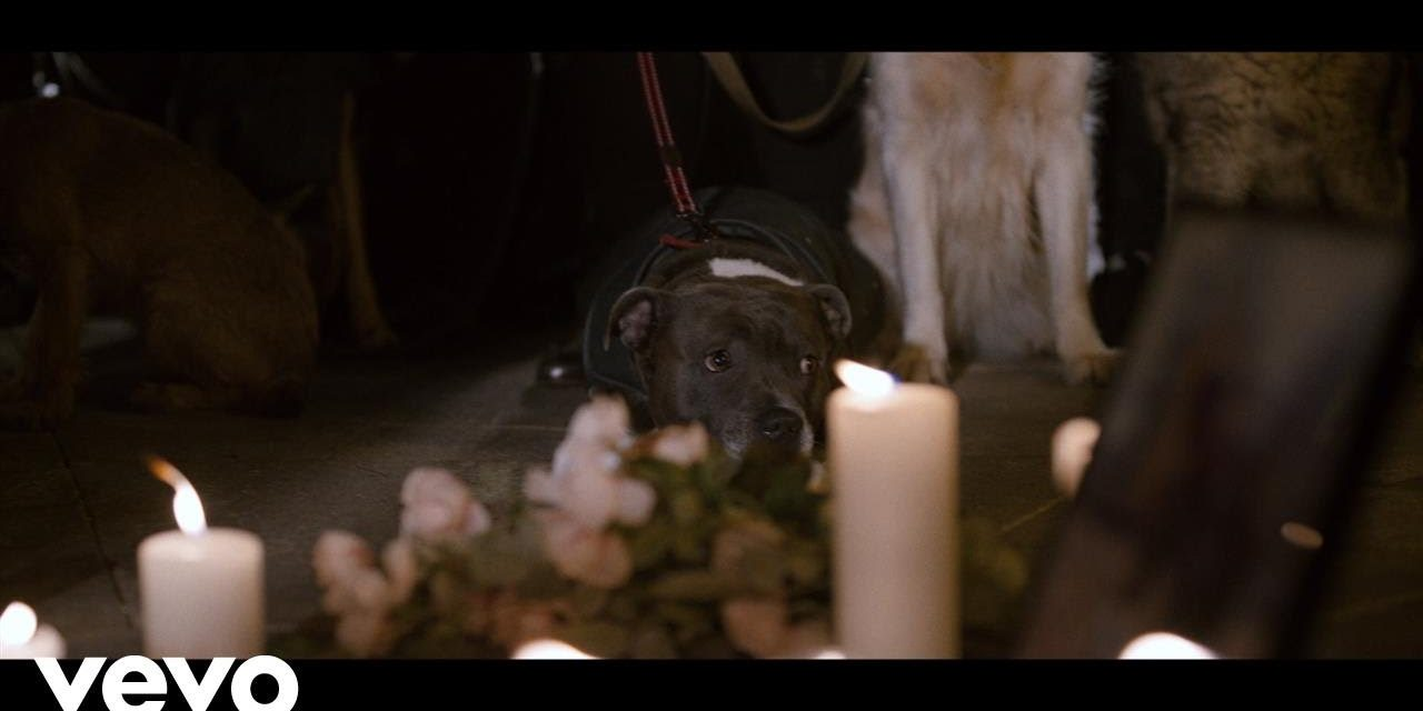 Tom Chaplin – Midnight Mass (Official Music Video)